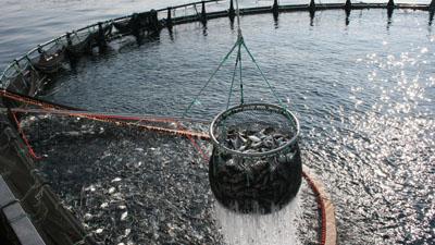 acuicultura1