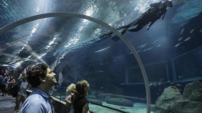 acuario-brasil